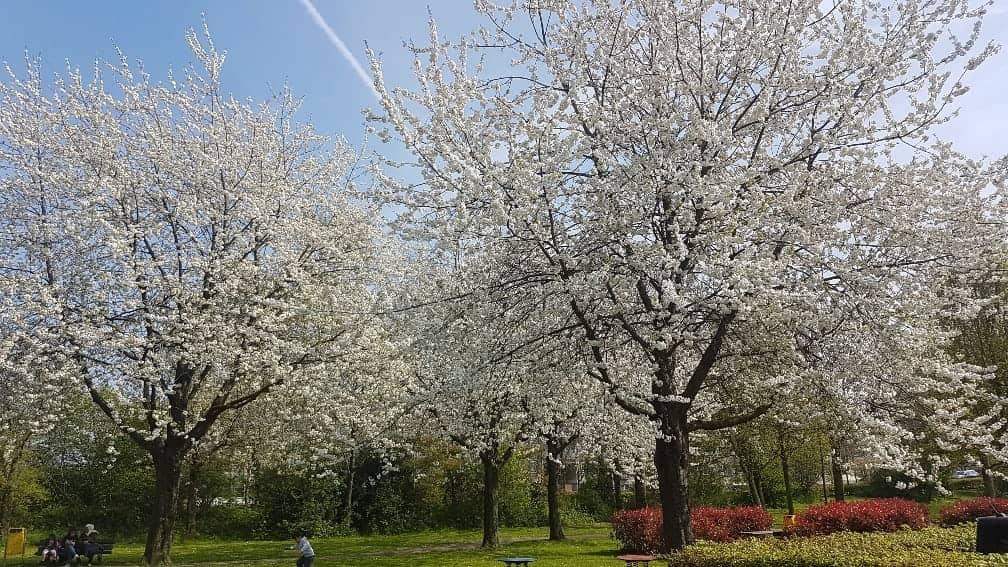 Wij denken proactief mee over bomenbeleid