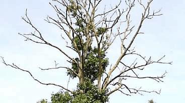 Bomen vervangen
